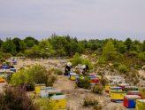 Μοναστηριακή Μελισσοκομία - Πώς άρχισαν όλα